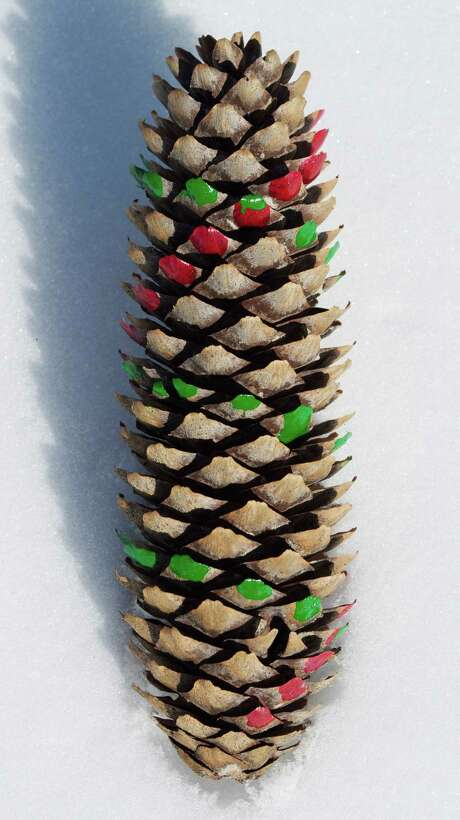 A spruce cone shows a Fibonacci sequence. Photo: Lee Reich, FRE / AP