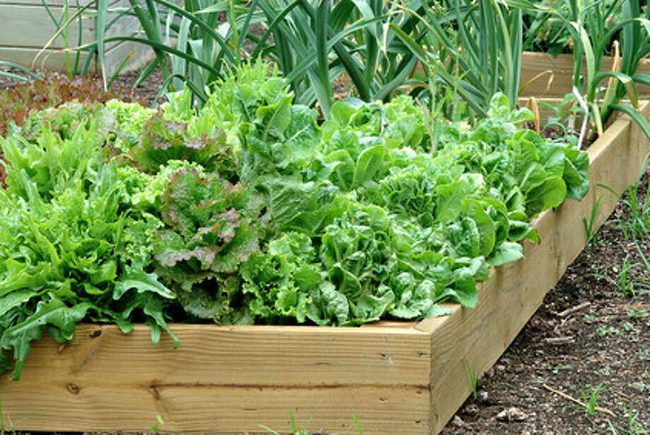 Learn more about vegetable gardening at area events. Photo: Fotolia