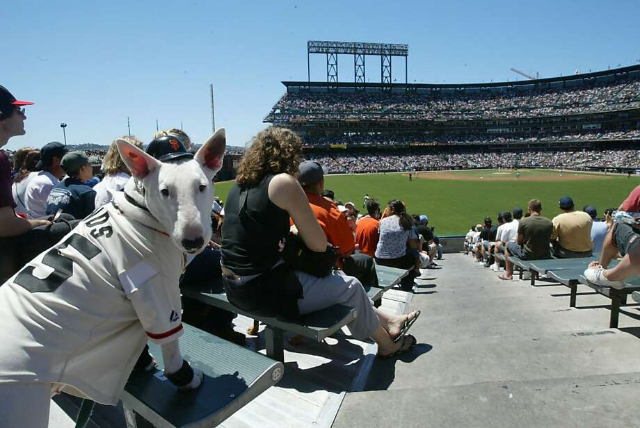 Mabel the English Bull Terrier enjoys at game at Pac Bell Park in 2003. Photo: Deanne Fitzmaurice, SFC