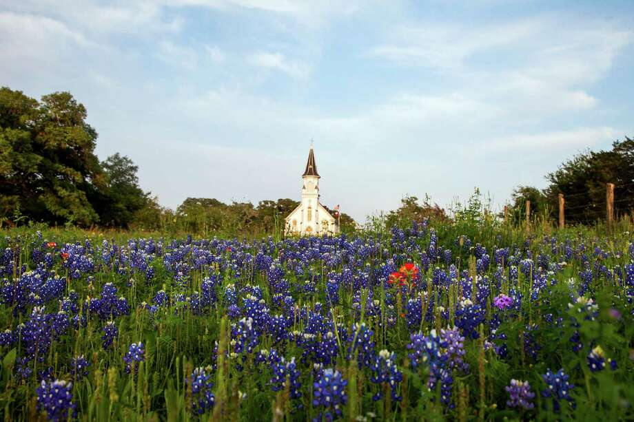 Saints Cyril and Methodius Church rises over a field full of bluebonnets last March in Fayette County. Photo: Smiley N. Pool, Staff / © 2012  Houston Chronicle