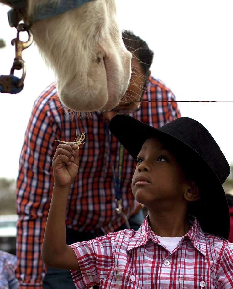Nicholas Lyles, 5, a Garden Oaks Elementary School student feeds a horse a piece of hay in the parking lot of a Sears department store on Shepherd near 43rd St. as The Spanish Trail Ride group made a stop on their way to Memorial Park to kick off the Houston Livestock Show and Rodeo Friday, Feb. 22, 2013, in Houston. Photo: Johnny Hanson, Houston Chronicle / © 2013  Houston Chronicle