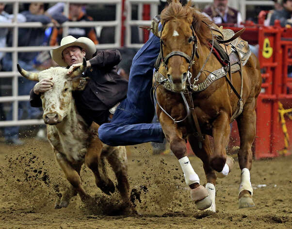 Blake Knowles slides onto the steer during the steer wrestling competition  at the AT&T Center on Friday, February 22, 2013. Photo: TOM REEL