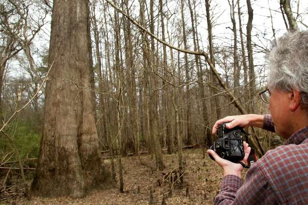 Andrew Sipocz takes a photo of a cypress tree while hiking at Davis Hill Natural Area Wednesday, Feb. 20, 2013, near Tarkington, Texas. The tract of land was purchased by Texas Parks and Wildlife in 1983, but has never been developed to be used by the public. Photo: Brett Coomer, Houston Chronicle / © 2013 Houston Chronicle