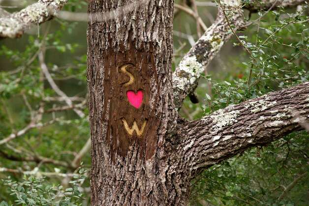 A tree is marked up at Davis Hill Natural Area Wednesday, Feb. 20, 2013, near Tarkington, Texas. The tract of land was purchased by Texas Parks and Wildlife in 1983, but has never been developed to be used by the public. Photo: Brett Coomer, Houston Chronicle / © 2013 Houston Chronicle