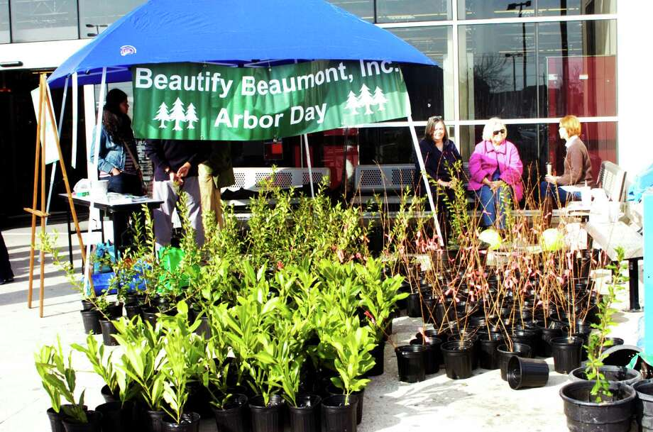 Beautify Beaumont gave away 500 trees including holly, magnolia, oak and maples Saturday at HEB in honor of Arbor Day. The group wants to replace trees lost in hurricanes Rita, Humberto and Ike. Photo: Sarah Moore