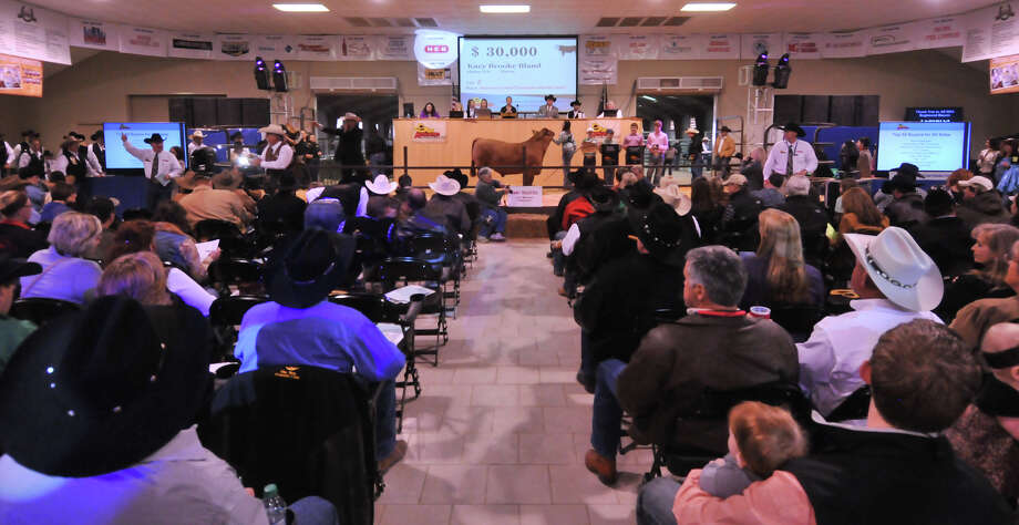 A larger crowd of buyers turned out to the San Antonio Stock Show and Rodeo auction Saturday. Photo: Robin Jerstad, Robin Jerstad / For The Express-News