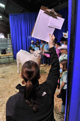 Cassie Johnson tries to get the attention of grand champion market steer, M&M, during a photo session following his auction at the San Antonio Stock Show and Rodeo. The steer was sold for $120,000. Photo: Robin Jerstad, Robin Jerstad / For The Express-News