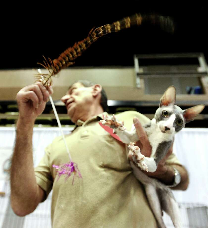 "Warren Joubert tries to keep Romeos attention after being judged at the Wildcatters Cat Club 22nd Annual Allbreed and Household Pet Cat Show ""The ACatemy Awards"" event at the Beaumont Civic Center on Saturday, February 23, 2013. Photo taken: Randy Edwards/The Enterprise"