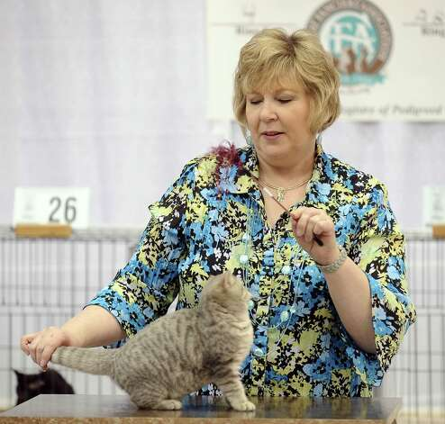 "Kathy Black judges a feline at the Wildcatters Cat Club 22nd Annual Allbreed and Household Pet Cat Show ""The ACatemy Awards"" event at the Beaumont Civic Center on Saturday, February 23, 2013. Photo taken: Randy Edwards/The Enterprise"