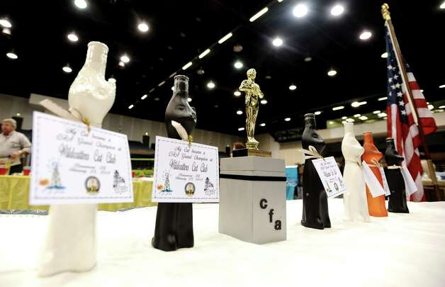 "Awards wait to be claimed at the Wildcatters Cat Club 22nd Annual Allbreed and Household Pet Cat Show ""The ACatemy Awards"" event at the Beaumont Civic Center on Saturday, February 23, 2013. Photo taken: Randy Edwards/The Enterprise"