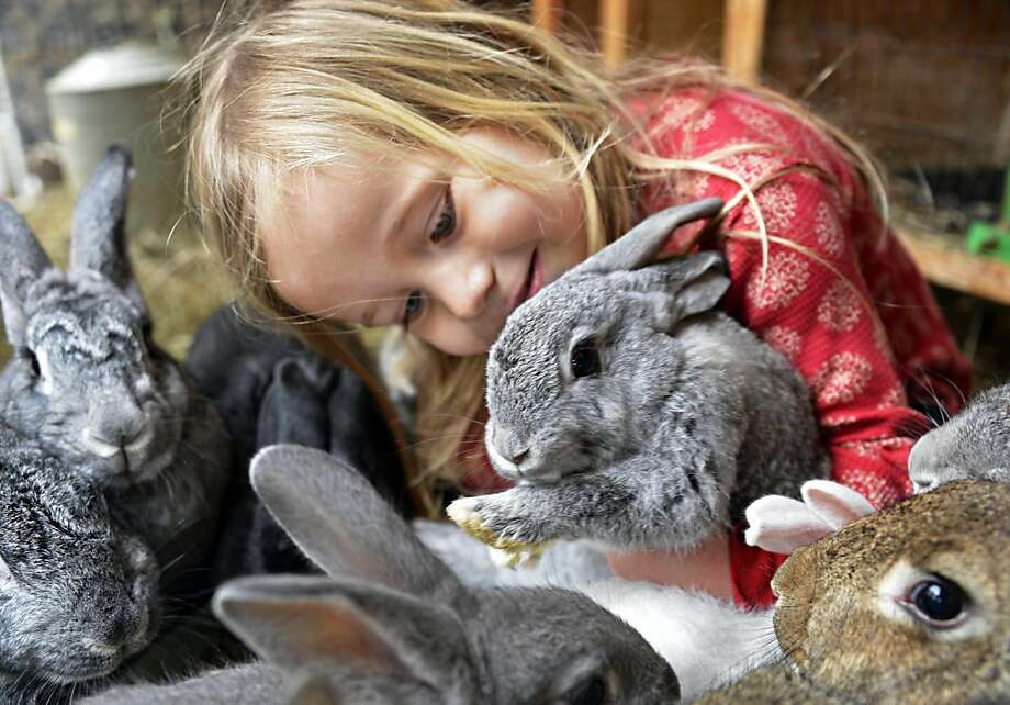 I feel a tea party coming on:A 3-year-old Alice named Violet Kellogg snuggles with bunnies inside the Radix ecological sustainability center greenhouse in Albany, N.Y. Photo: John Carl D'Annibale, Albany Times Union