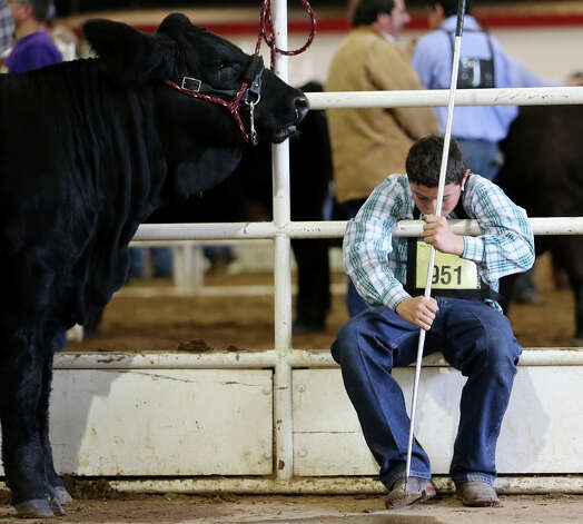 "Joe Martinez, 15, of Ferris, Texas, takes a break along with simbrah heifer, ""Wicked Beauty,"" at the San Antonio Stock Show and Rodeo, Monday, Feb. 11, 2013. Martinez was competing in the Open Breeding Beef Cattle. Photo: Jerry Lara, San Antonio Express-News / © 2013 San Antonio Express-News"
