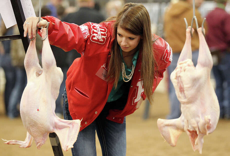 Jessica Horak, 17, with Bellville High School in Bellville, Texas, checks out a turkey carcass after the Poultry Judging Contest at the San Antonio Stock Show and Rodeo, Sunday, Feb. 17, 2013. Photo: Jerry Lara, San Antonio Express-News / © 2013 San Antonio Express-News