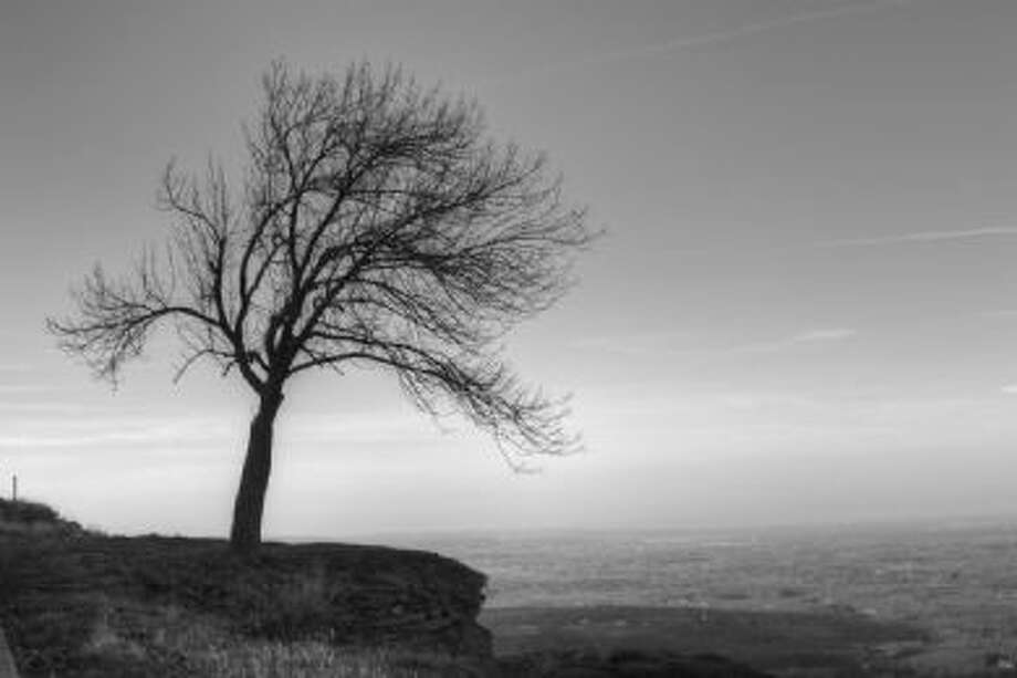 Christian Malanga of Albany took this dramatic photo of a lone tree hanging on a ledge at the John Boyd Thacher Park. (Christian Malanga)