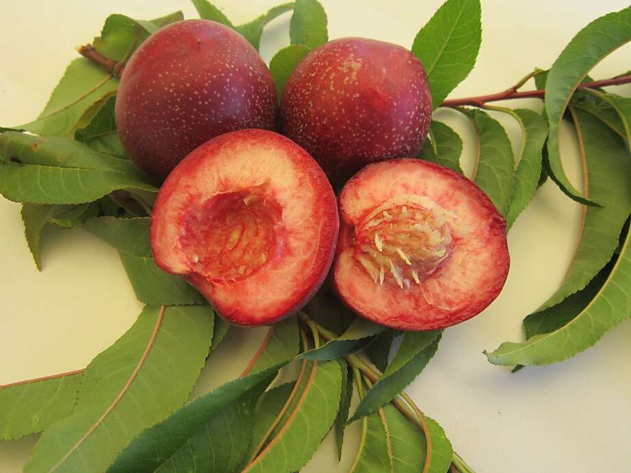 'Raspberry Red' nectarine is one of two of the rare stone-fruit varieties released this year. Photo: California Rare Fruit Growers