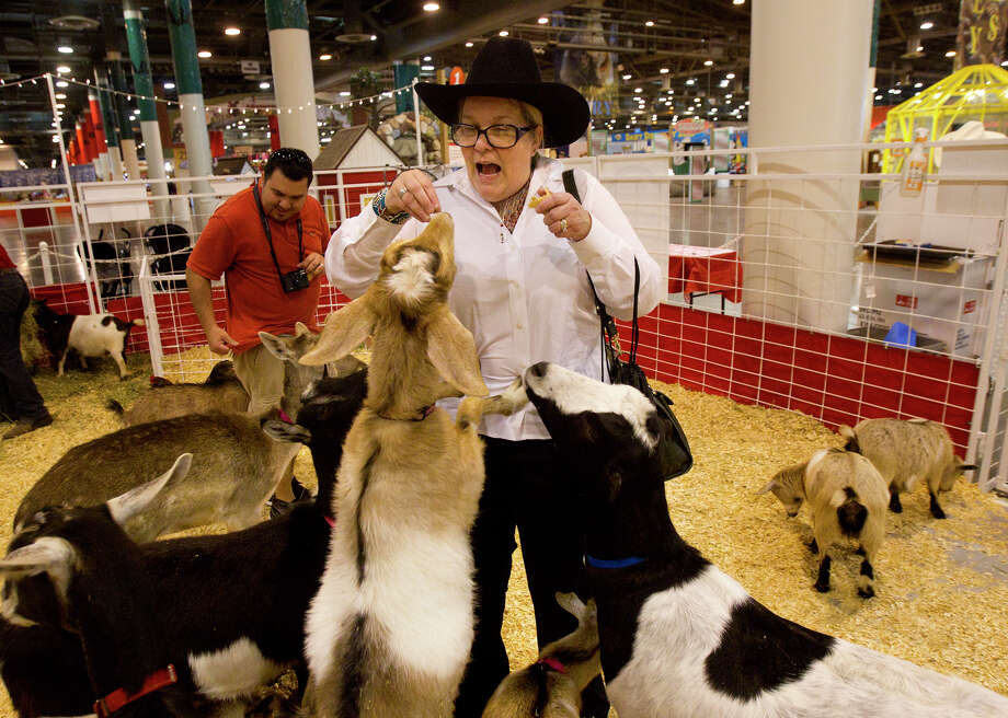 Elizabeth Wizinsky reacts as she is bombarded by animals in the petting zoo at the Houston Livestock Show and Rodeo, Monday, Feb. 25, 2013, in Houston. Photo: Cody Duty, Houston Chronicle / © 2013  Houston Chronicle