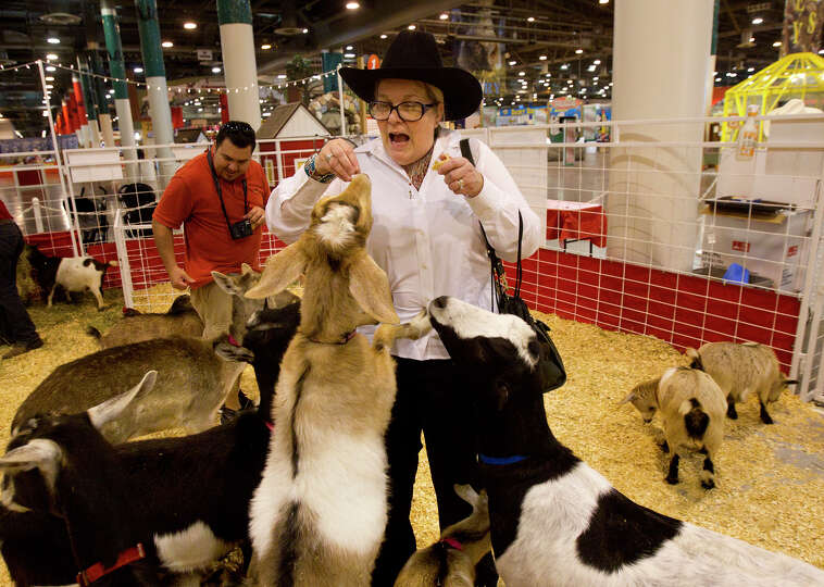 Elizabeth Wizinsky reacts as she is bombarded by animals in the petting zoo at the Houston Livestock