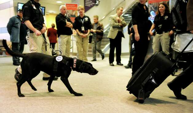Seven, a Passenger Screening Canine, left, sniffs a passing suitcase on Tuesday, Feb. 26, 2013, at Albany International Airport in Colonie, N.Y. The Labrador retriever is trained to detect possible explosive substances for the Transportation Security Administration. (Cindy Schultz / Times Union) Photo: Cindy Schultz / 00021287A