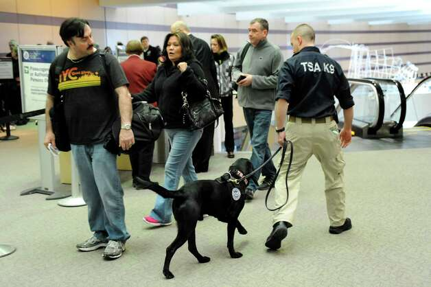Seven, a Passenger Screening Canine, center, takes in the scents of passengers and suitcases on Tuesday, Feb. 26, 2013, at Albany International Airport in Colonie, N.Y. The Labrador retriever is trained to detect possible explosive substances for the Transportation Security Administration. (Cindy Schultz / Times Union) Photo: Cindy Schultz / 00021287A