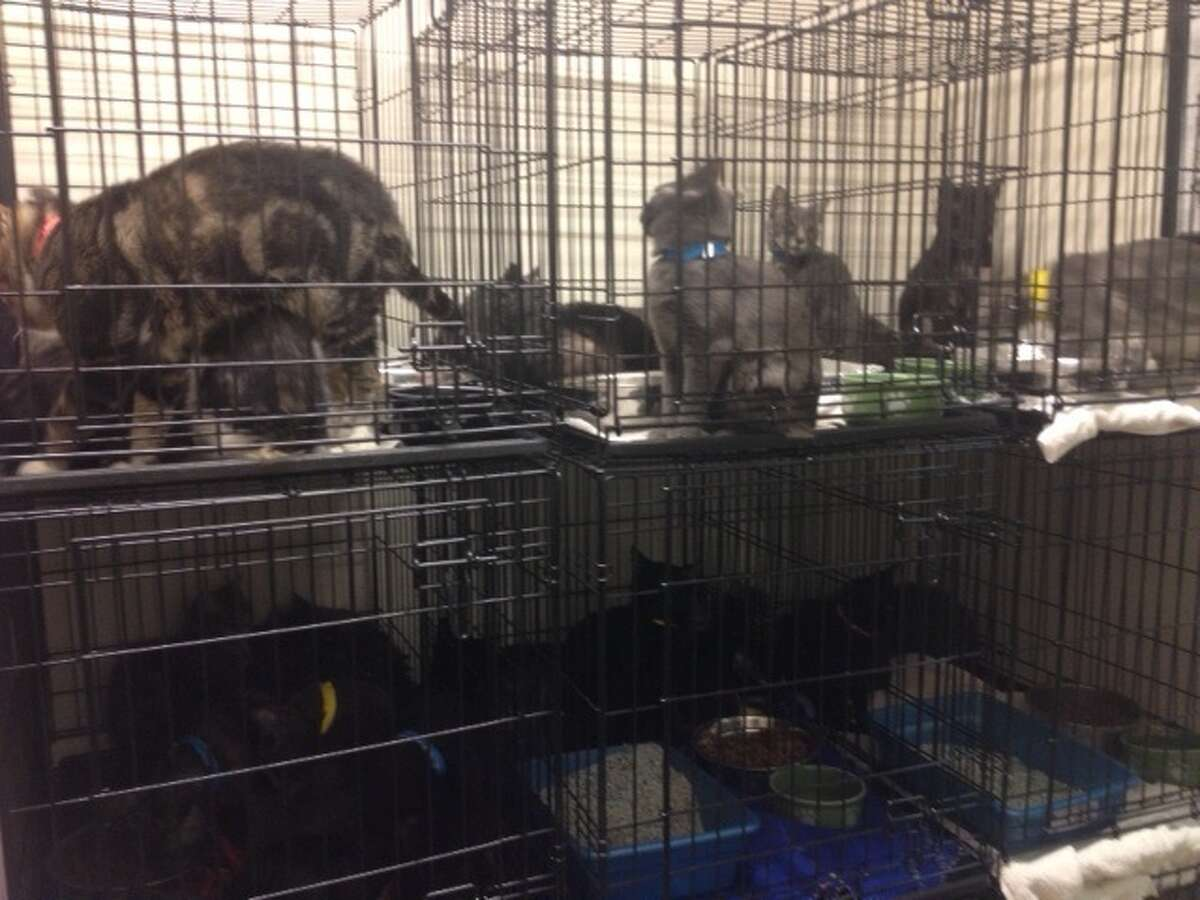 Cats rescued from home in Wright (photo courtesy Schoharie County Sheriff's Office)