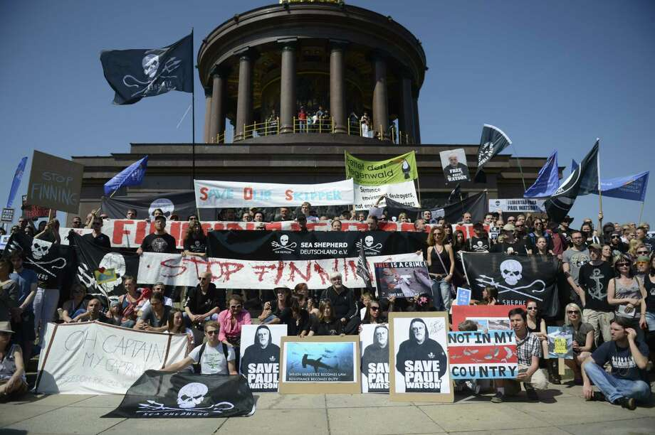 """Paul Watson (C), Canadian founder and president of the Sea Shepherd Conservation Society, and protesters demonstrate on May 23, 2012 in Berlin, where the Costa Rican President was expected for a visit. Watson is on bail while German authorities decide whether he can be extradited to Costa Rica on charges stemming from a high-seas confrontation over shark finning in 2002. Watson is accused of """"putting a ship's crew in danger"""". The Canadian national is well known for his pursuit and harassment of Japanese whaling boats off Antarctica which in recent years has significantly reduced the number of animals slaughtered. (Photo by ODD ANDERSEN/AFP/GettyImages) Photo: Getty Images"""