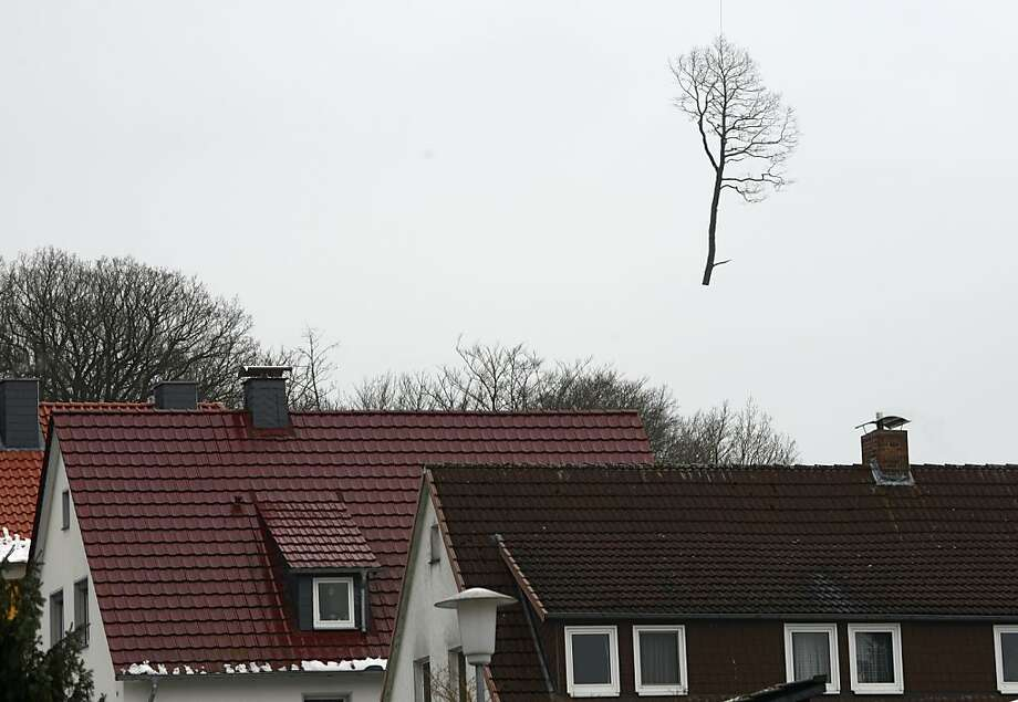 It's not even March yet,and already the trees are beginning to leave in Hannoversch Muenden, Germany. This one was tethered to an unseen helicopter. Photo: Uwe Zucchi, AFP/Getty Images