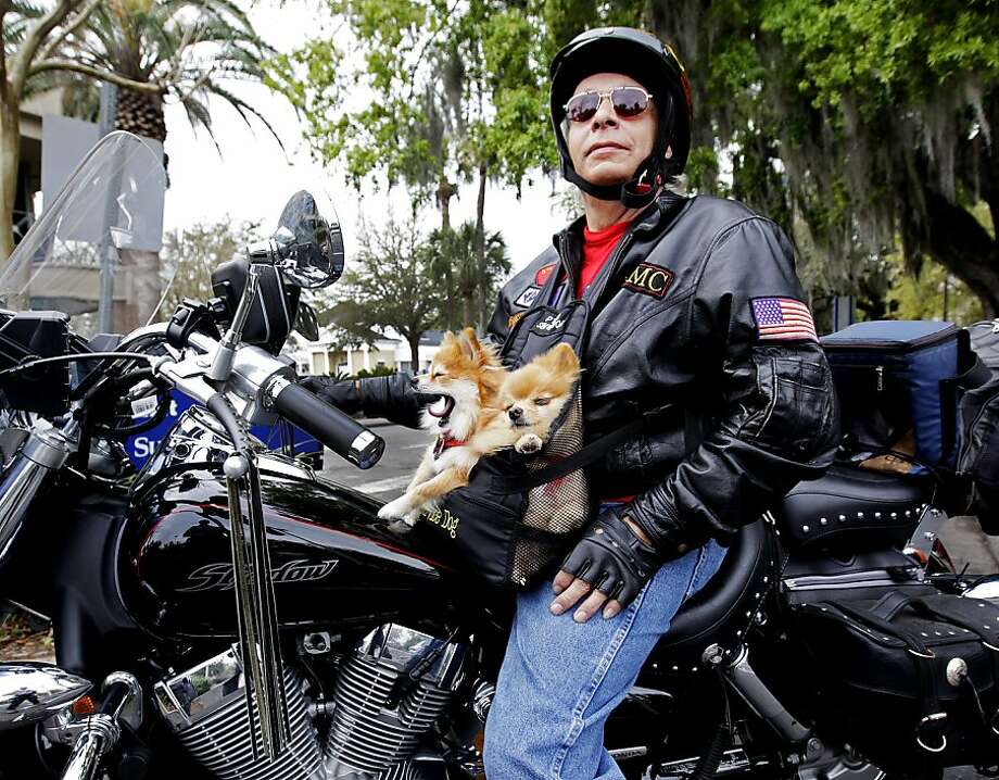 Pouch-sized service pooches: Joe Hanson, a Vietnam veteran who suffers from post traumatic stress disorder, says his service dogs Star and Kira help keep him calm. He takes them everywhere on his motorcycle, including to the VA hospital in Gainesville, Fla., where he had an appointment Monday. Photo: Matt Stamey, Associated Press