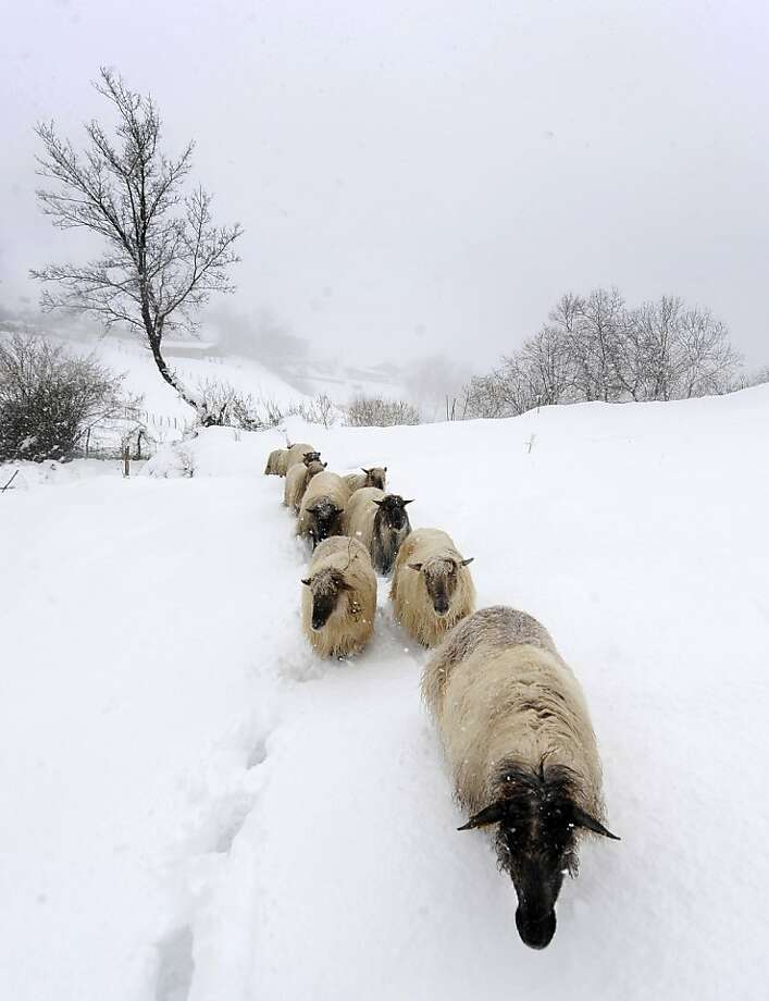 Leave them alone and they'll come home …and stand at the barn bleating until you let them in out of the snow. (Basque village in Oquendo, Spain.) Photo: Rafa Rivas, AFP/Getty Images