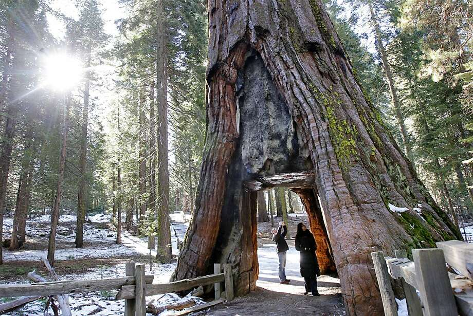Neil Bradley (left) and Azra Kovacevic, visiting from Europe, explore the tourist-pleasing California Tunnel Tree. New proposals on the table could drastically cut back on the human damage to the giant sequoias. Photo: Michael Macor, The Chronicle