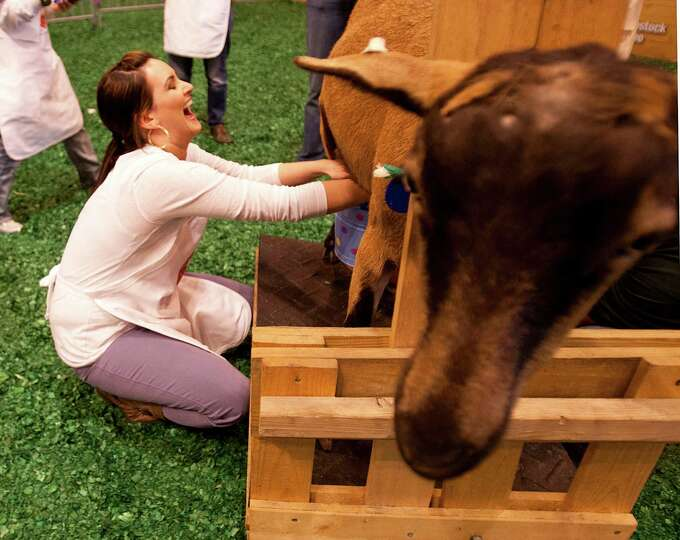 Lauren Finkelstein of the Mix 96.5 laughs as she tugs on a goats udders.