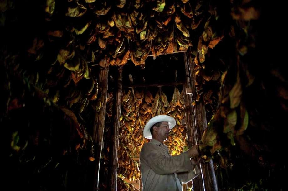 Farmer Eulogio Montesino, 52, checks tobacco leaves in the western province of Pinar del Rio, Cuba. Photo: Ramon Espinosa, Associated Press / AP