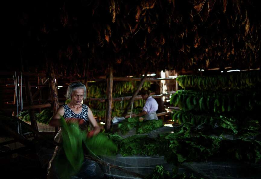 Women work on tobacco leaves at a warehouse in the western province of Pinar del Rio, Cuba.