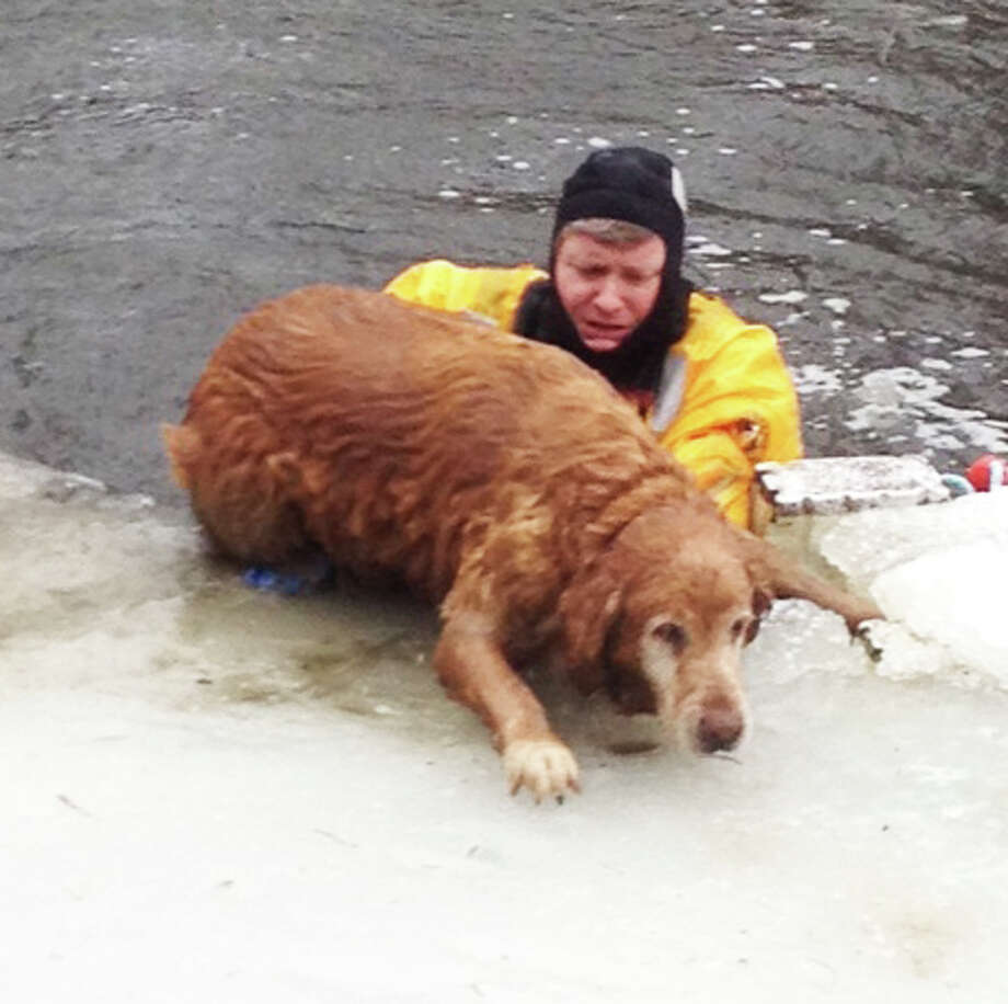 A dog is pushed to safety from the icy water of a Hales Road pond Wednesday by a Westport firefighter.  WESTPORT NEWS, CT 2/27/13 Photo: Westport Fire Department / Westport News contributed