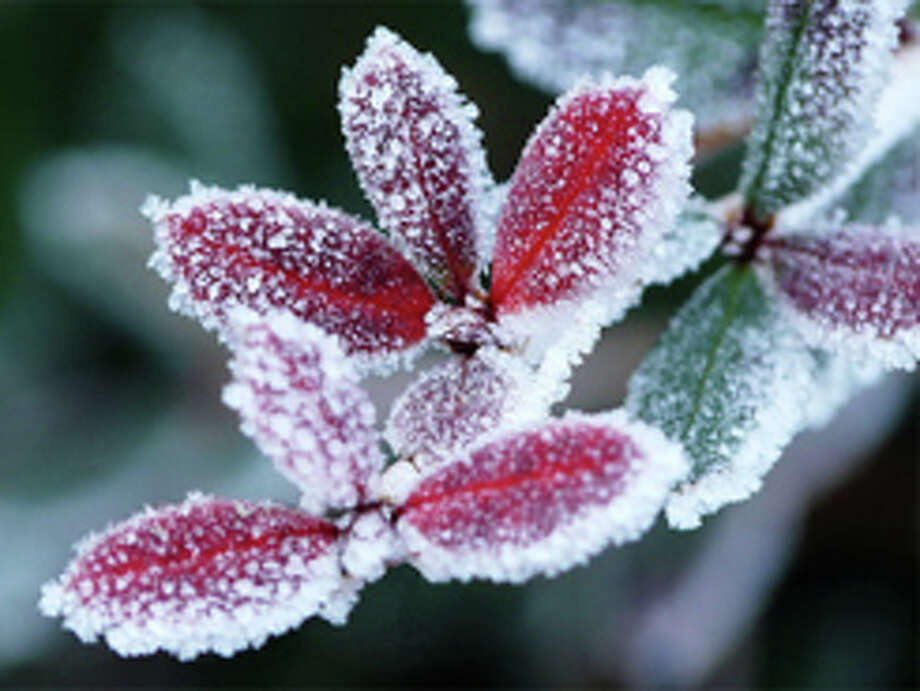 Saturday's overnight low may dip into the upper 30s in most areas but a light freeze may be possible in some spots. Photo: Fotolia / Nuvola - Fotolia