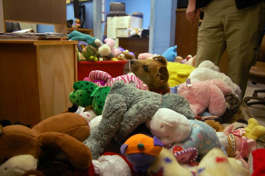 Plenty of plushies:Newtown, Conn., has so many stuffed animals sent in by well-wishers (62,000 and counting) that town officials have been sending some to the Aiken (S.C.) County Animal Shelter. The idea is for the teddy bears to keep puppies like Scooby company. Photo: Teddy Kulmala, Associated Press