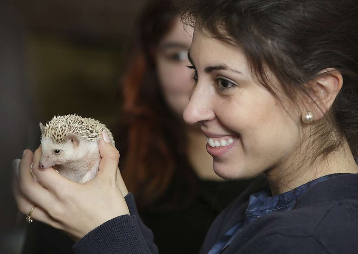 SUNY Orange student Monica Weinrich of Montgomery holds Shadow, a hedgehog, during a program by wildlife conservationist Ed Laquidara at SUNY Orange in Middletown, N.Y. on Tuesday, Feb. 26, 2013. The program was sponsored by the Board of Activities.