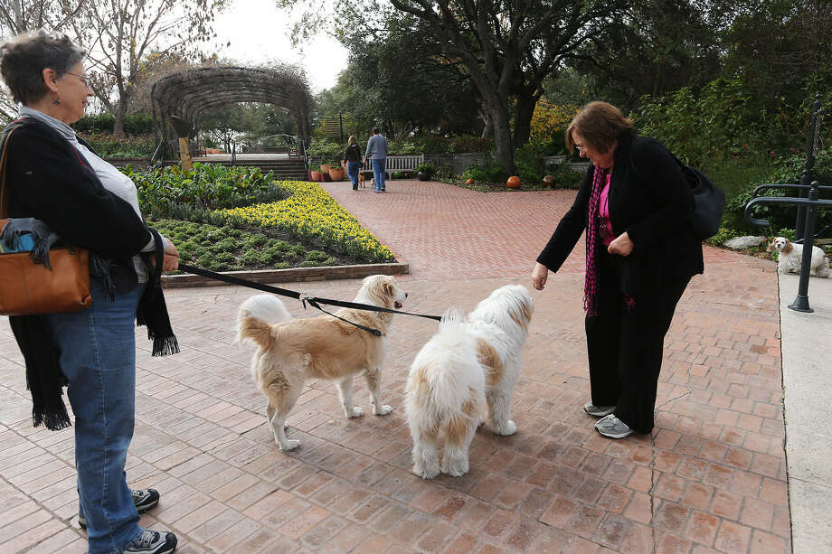 "Barb Lediff holds Queen Aphrodite and Princess Adelaide as they greet Ruth McDonald at the San Antonio Botanical Garden, which has ""Dog Days"" several times a year. Photo: Jerry Lara / San Antonio Express-News"