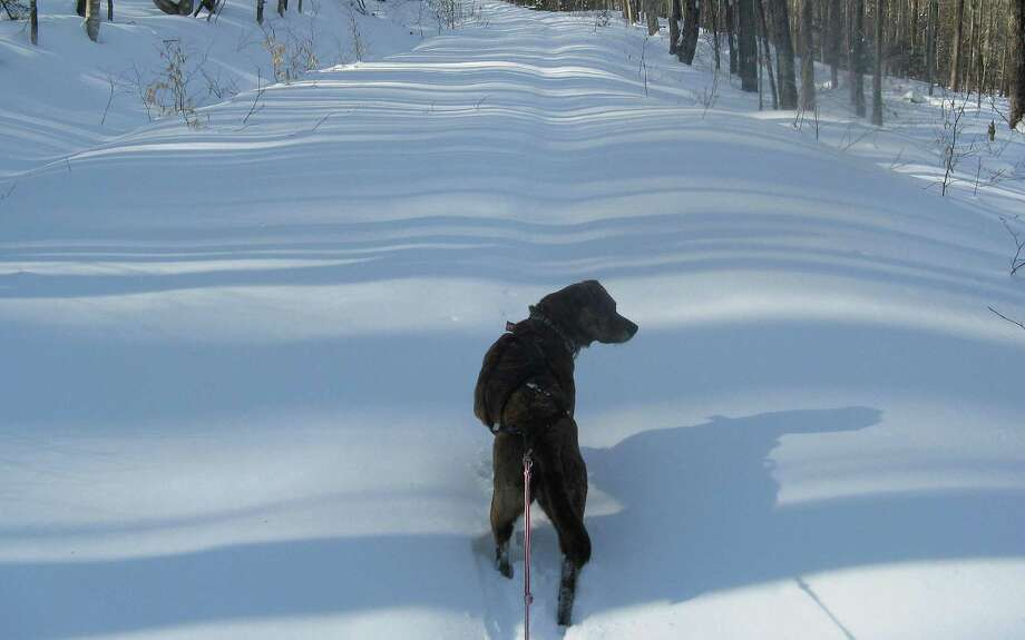 Photo by Herb Terns. Rocky pulls through fresh snow on the trail to Moose Pond. Photo: Picasa