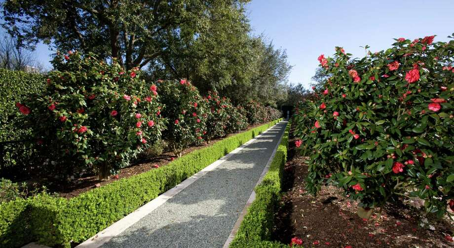 A stone urn punctuates the end of an allee of 'Purple Dawn' camellias in this garden on the trail. Photo: John Everett / John Everett