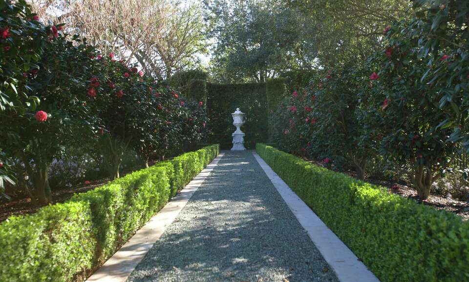 A stone urn punctuates an allee of  'Purple Dawn' camellias in this garden on the River Oaks Garden