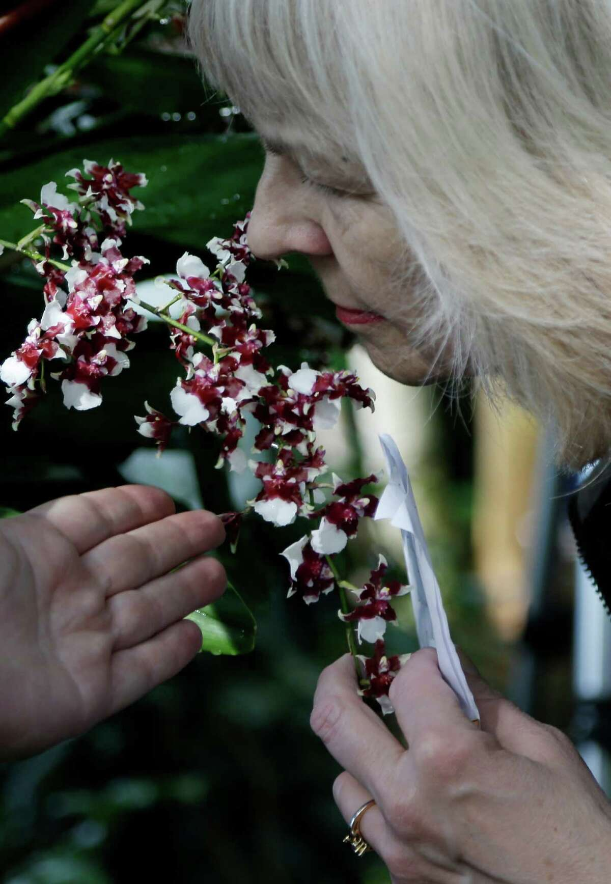 A woman smells Sharry Baby, also known as the chocolate orchid, during a press preview of the orchid show at the New York Botanical Gardens in New York, Thursday, Feb. 28, 2013. The botanical gardens will open their annual orchid show to the public on March 2, 2013