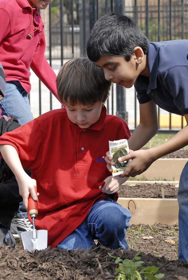 Mitchell Hardy (8) and Sarvesh Jadhav (7) (students in Fatima Spinner's second grade class) plant vegetable seedlings during a Plant Day Celebration at Askew Elementary Thursday 2/17/13. Photo © by Tony Bullard. Photo: © Tony Bullard 2013, Tony Bullard / © Tony Bullard & the Houston Chronicle