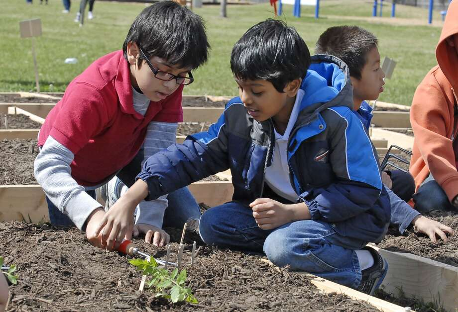 Second-graders Siddhartha Rana (8) and Harshadeep Kambhampati (8) plant vegetable seedlings during a Plant Day Celebration at Askew Elementary Thursday 2/17/13. Photo © by Tony Bullard. Photo: © Tony Bullard 2013, Tony Bullard / © Tony Bullard & the Houston Chronicle