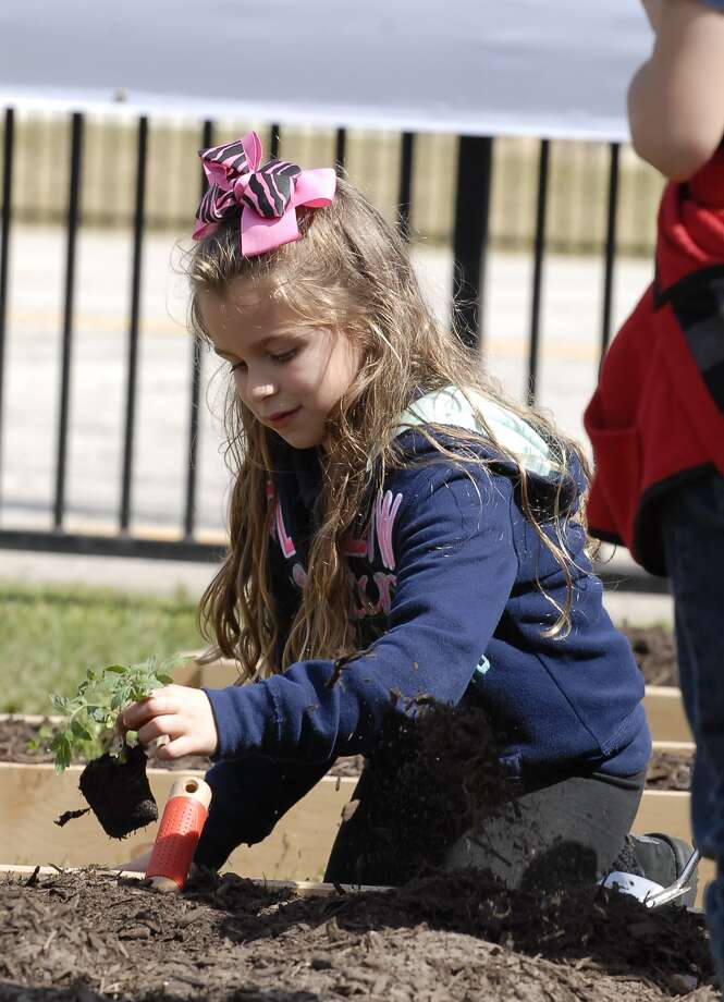 Seven-year-old second-grader Samantha Poncio (Janet White is her teacher) plants a vegetable seedling during a Plant Day Celebration at Askew Elementary Thursday 2/17/13. Photo © by Tony Bullard. Photo: © Tony Bullard 2013, Tony Bullard / © Tony Bullard & the Houston Chronicle
