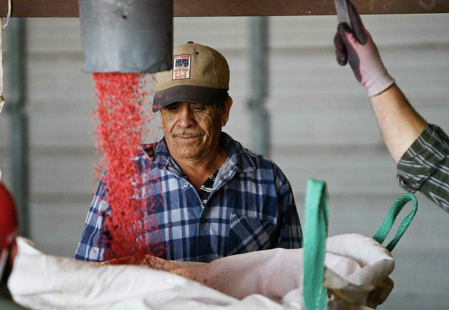 Oscar Hidalgo watches a bag fill with rice for planting in the Rice Belt Warehouse, Friday, March 1, 2013, in El Campo. The rice is pink because it's covered with a fungicide to protect it them when they are in the ground. The rice sold by Rice Belt has a 85-90 percent chance of germinating. Photo: Nick De La Torre, Chronicle / © 2013 Houston Chronicle
