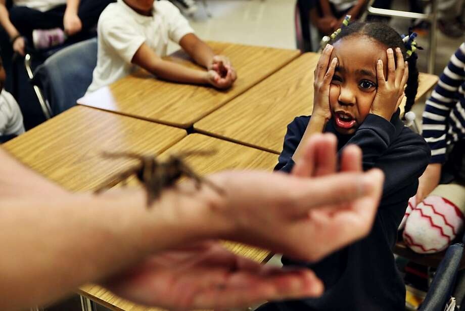 "Idlewild second grader Sydney Berry acts nervous as Preston Warford of Terminix shows off ""Legs,"" a tarantula, during a presentation Warford made to the students about bugs and how they can be beneficial to the ecosystem at the Memphis, Tenn., school on Friday March 1, 2013, in Memphis. Photo: Kyle Kurlick, Associated Press"
