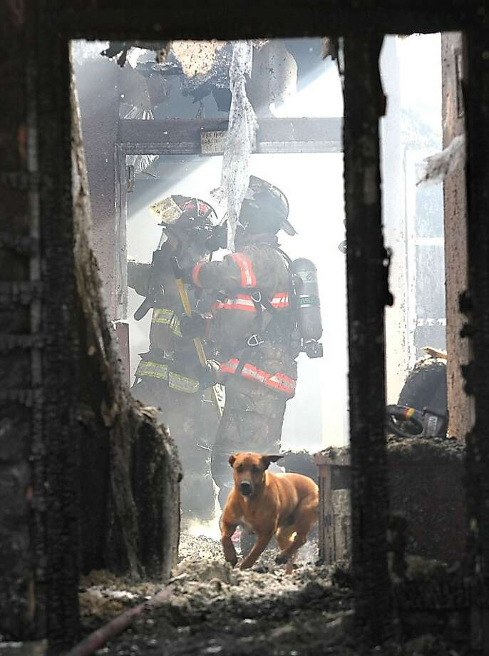 A confused and frightened family dog runs past firefighters inside a smoldering and smoking house in Pasco, Washington, Friday, Mrach 1, 2013. Fire officials reported the dog was rounded up by Tri-Cities Animal Shelter and Control Services employees. Photo: Bob Brawdy, McClatchy-Tribune News Service