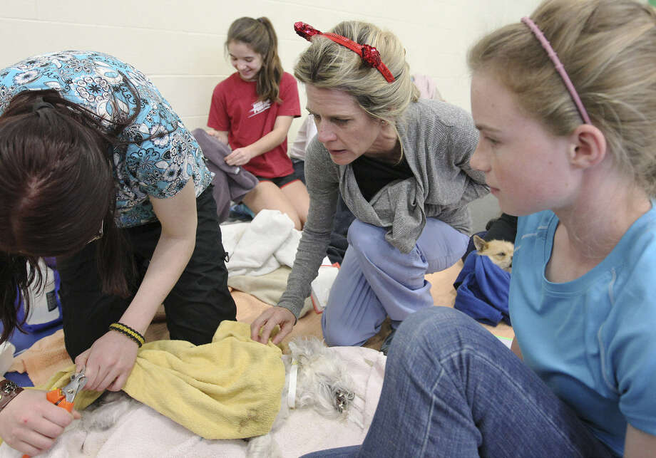 Veterinarian Shannon Espy (second from right) looks at a dog in the recovery area at SNIPSA's Big Fix free spay and neuter clinic at Miller's Pond Community Center. Photo: Photos By Kin Man Hui / San Antonio Express-News