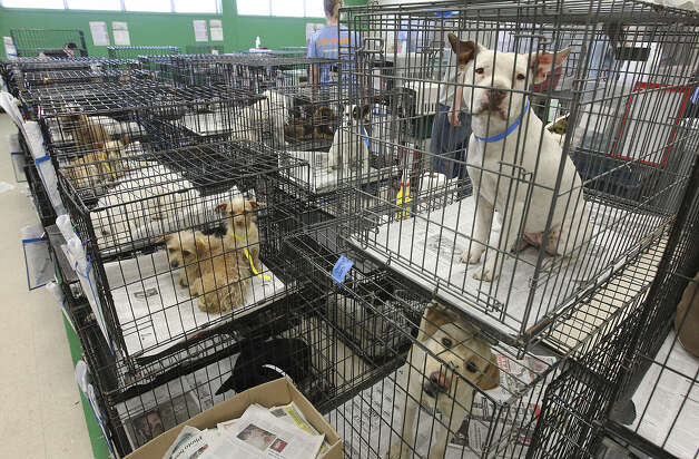 Canines recovering from spaying and neutering procedures wait for their owners to come take them home.