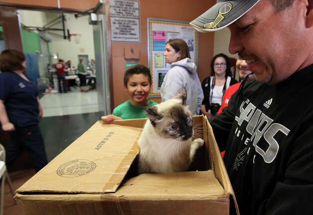"A feline named Phoebe peeks out from a box before her owner, Freddie Gallegos (right) drops her off to be spayed at SNIPSA's The Big Fix free spay and neuter clinic at Miller's Pond Community Center on Saturday, Mar. 2,  2013. Over 250 pets were taken in at the clinic that was co-sponsored by the city and by SNIPSA. Vetinarians, vet techs and volunteers converted a gym into a make-shift animal surgical hospital taking in cats and dogs from the area. Vetinarians Shannon and Bob Espy started the program in 2005 in San Antonio. More clinics are planned for the year and pet owners can find information from SNIPSA.org or through the city's Animal Care Services website. The next clinic is planned for April and July according to Espy. SNIPSA's mission is to ""rescue, rehabilitate and re-home adoptable animals"" and ""encourage responsibility within the pet owning population"" according to the website. Photo: Kin Man Hui, San Antonio Express-News / © 2012 San Antonio Express-News"